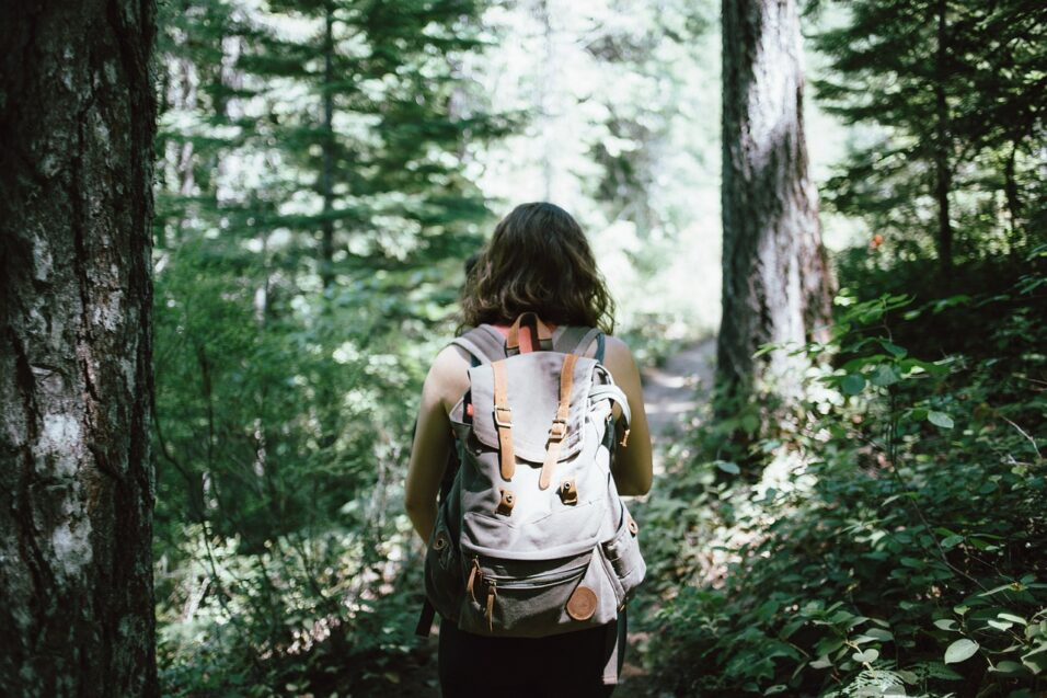 Was tun bei Waldwanderung
